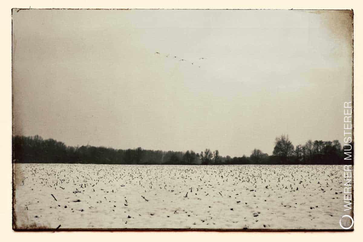 Winterlicher Vogelzug